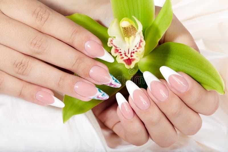 Hände mit langen künstlichen Franzosen manikürten die Nägel, die eine Orchideenblume halten lizenzfreie stockfotografie