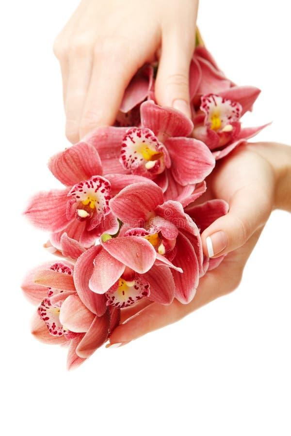 Hände und Orchidee stockfotografie