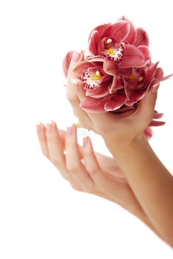 Hände und Orchidee stockfoto