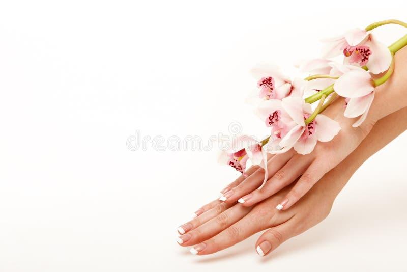 Hände und Orchidee lizenzfreies stockfoto
