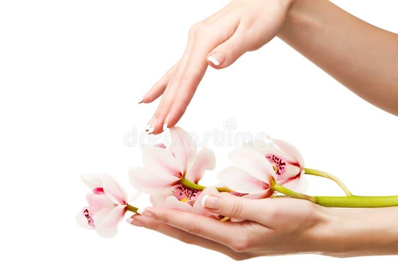 Hände und Orchidee lizenzfreie stockbilder