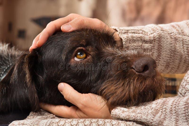 Händer av ägaren som daltar en hund royaltyfri bild