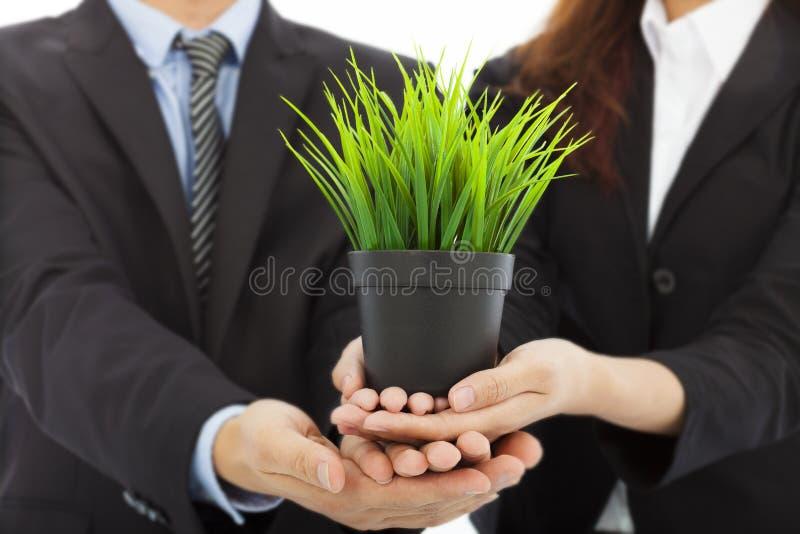 Händer av affärsfolk som rymmer det gröna unga trädet royaltyfri fotografi