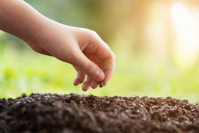 Händer av barn som planterar en kärna ur i jordjordbruk på naturlig gräsplan royaltyfri foto