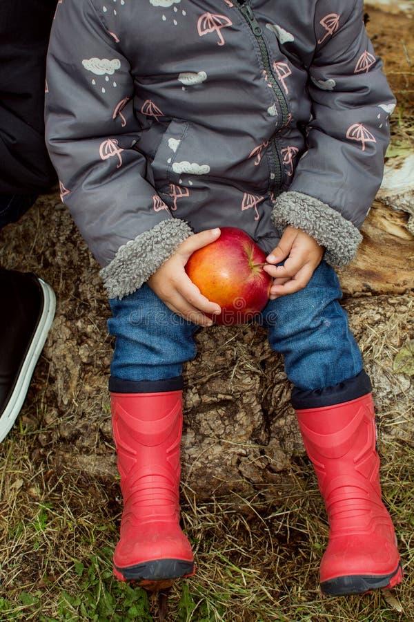 Händer av ett barn som rymmer ett rött äpple Röda kängor för ungar på en höstdag royaltyfria foton