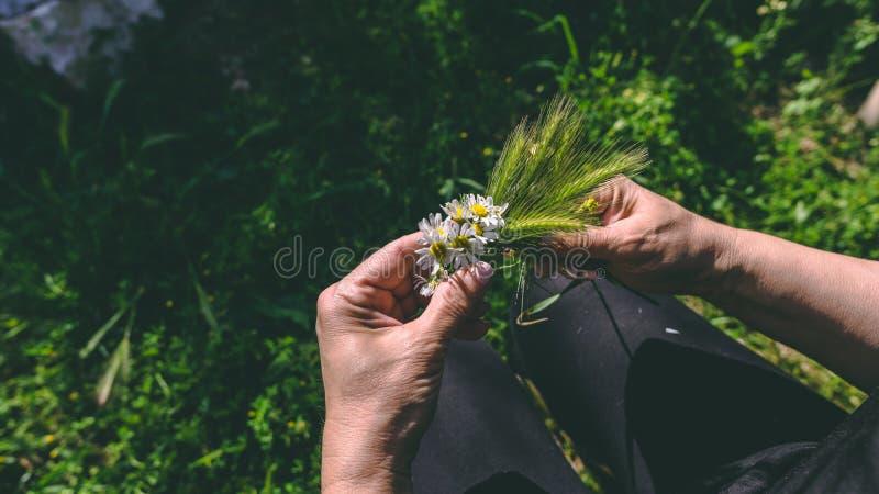 Händer av kvinnan som tillverkar kransen av kamomillblommor royaltyfri foto
