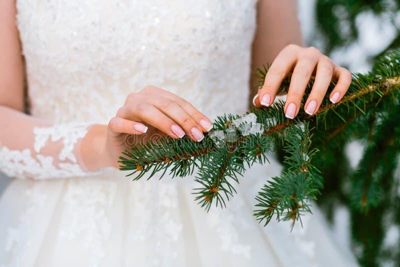 Händer för brud` som s slår den gröna prydliga filialen brudbrudgum som gifta sig utomhus vinter utomhus arkivbild