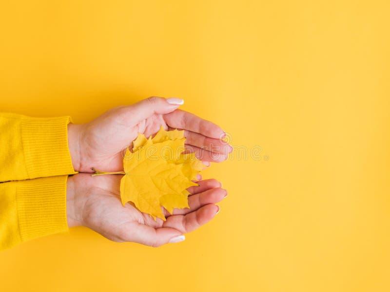 Händer för kvinna för lönnlöv för rolig nedgång för höst gula royaltyfria foton