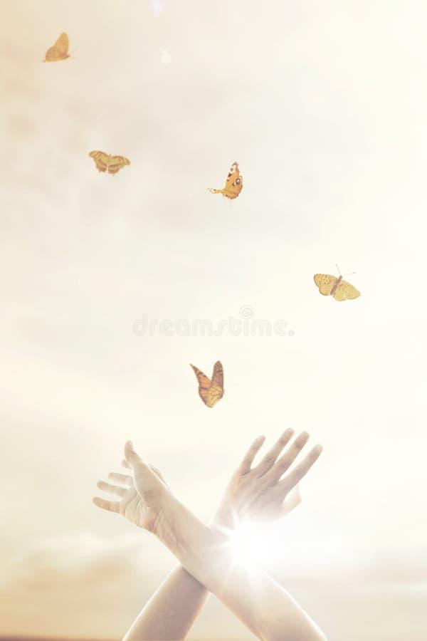 händer för kvinna` s dansar i harmoni med några fjärilar arkivbild