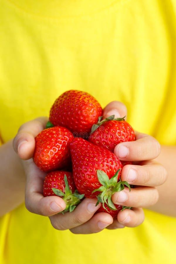 Händer för sommar för frukt för bär för jordgubbe för jordgubbebärfrukter royaltyfri foto