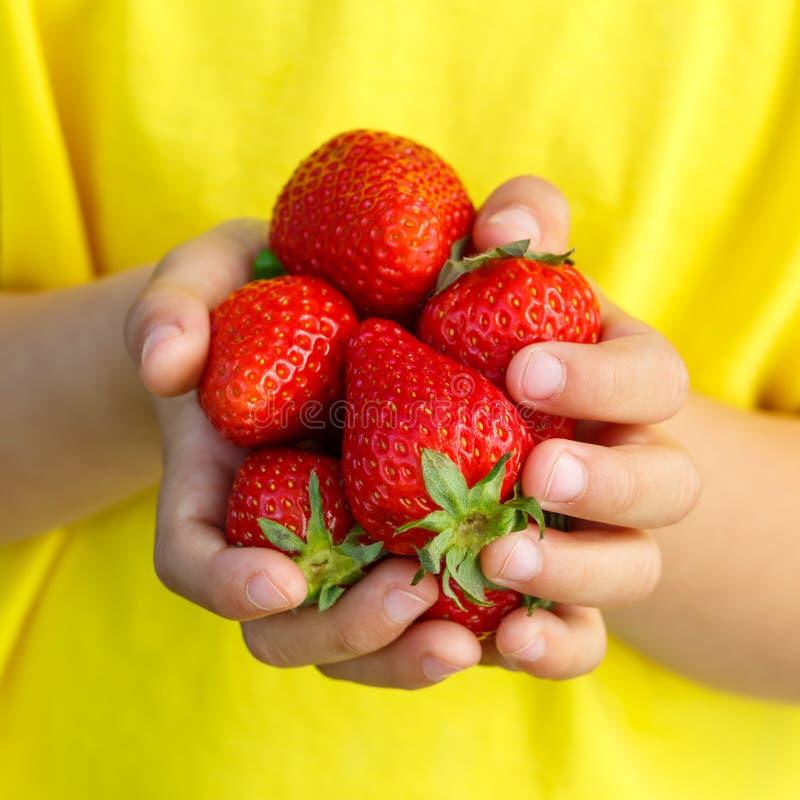 Händer för sommar för frukt för bär för jordgubbe för jordgubbebärfrukter arkivbilder