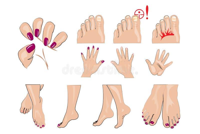 Händer fot och spikar manikyr vektor illustrationer