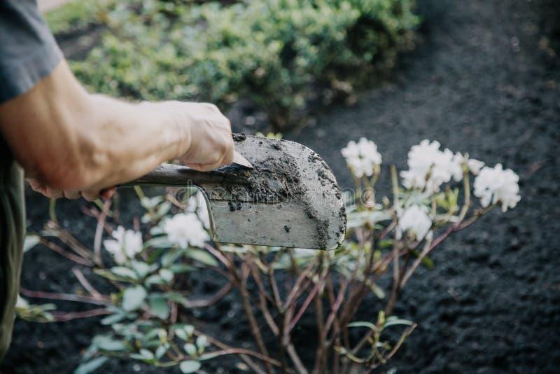 Händer gör ren bajonettskyffeln från jordning på vikt arkivbilder