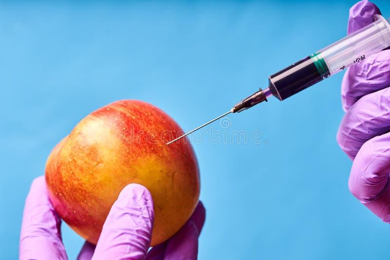 H?nder i bl?a handskar injicerar flytande fr?n injektionssprutan in i Apple, genetiskt ?ndrad teknik arkivfoton