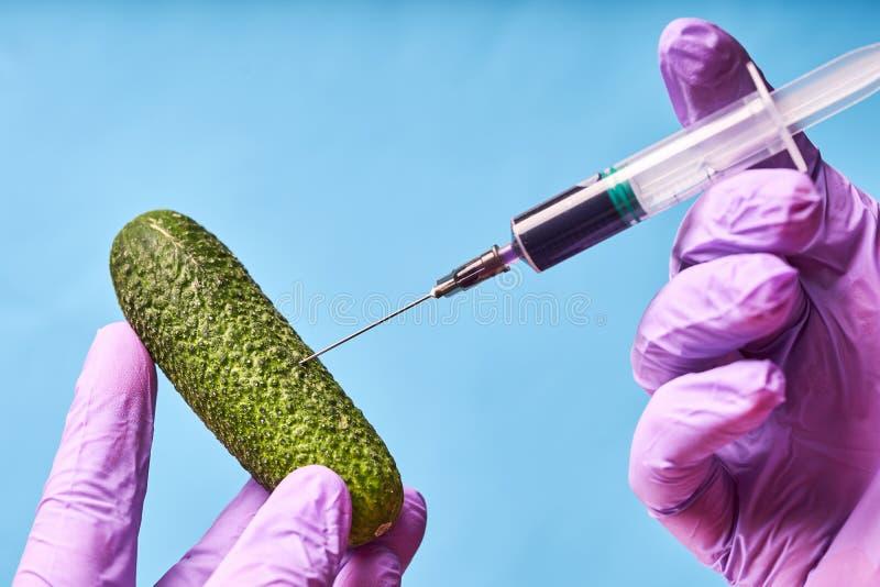 H?nder i bl?a handskar injicerar flytande fr?n injektionssprutan in i gurkan, genetiskt ?ndrad teknik royaltyfri foto