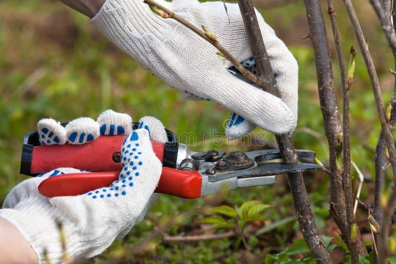 Händer i handskar som beskär den svarta strömmen fotografering för bildbyråer