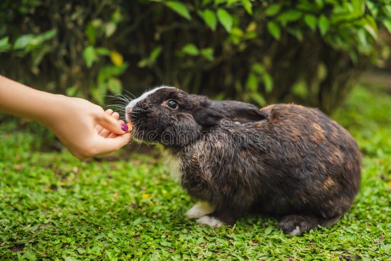 Händer matar kaninen Skönhetsmedel testar på kanindjur Fri grymhet och djurt missbrukbegrepp f?r stopp arkivbild