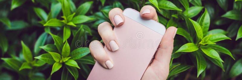Händer med rosa färger spikar BANRET för hållrosa färgtelefonen, långt format royaltyfri foto