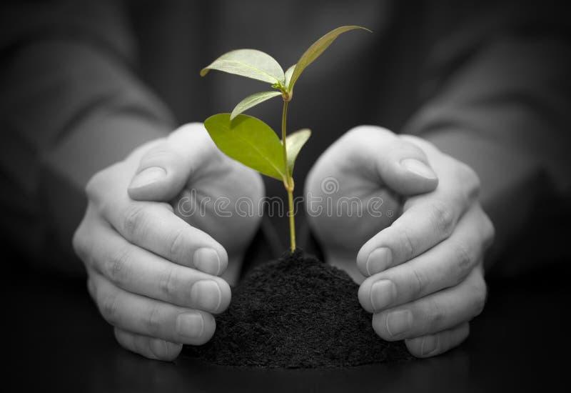 händer planterar skyddat litet royaltyfria foton