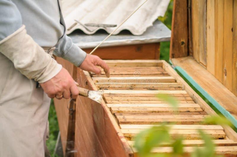 Händer rymmer en bikupa med bin arkivbild