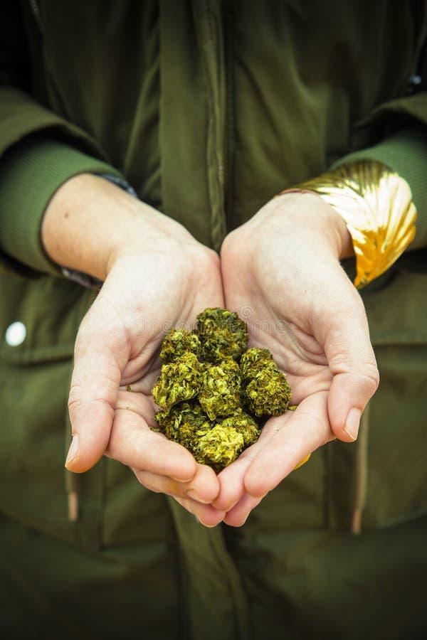 Händer rymmer lagliga marijuanablommor fotografering för bildbyråer