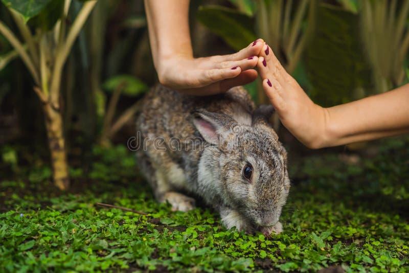 Händer skyddar kanin Skönhetsmedel testar på kanindjur Fri grymhet och djurt missbrukbegrepp f?r stopp arkivfoto