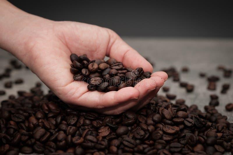 Händer som kontrollerar grillade kaffebönor royaltyfri foto