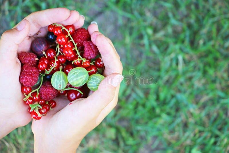 Händer som rymmer den nya sommarblandningen av färgglade bär fotografering för bildbyråer
