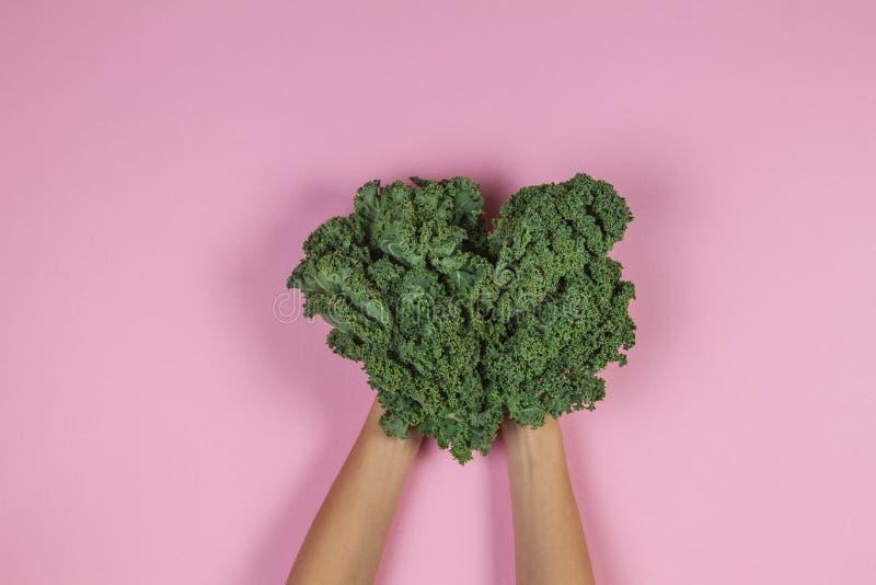 Händer som rymmer en grupp av grönkålsidor över pastellfärgad rosa bakgrund arkivbild