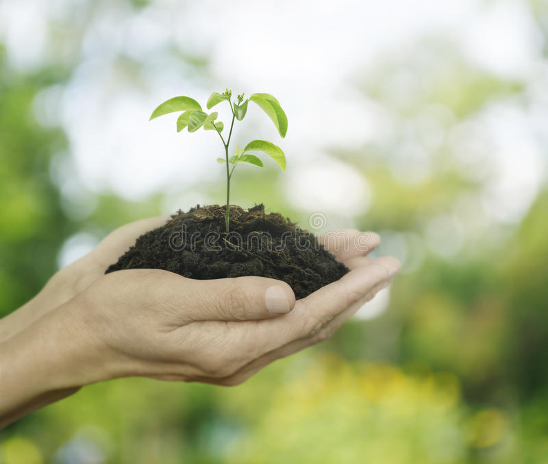 Händer som rymmer en ny ung växt med jord över grön trädboke arkivfoton
