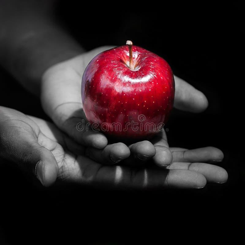 Händer som rymmer ett rött äpple, förbjudna frukten royaltyfria foton