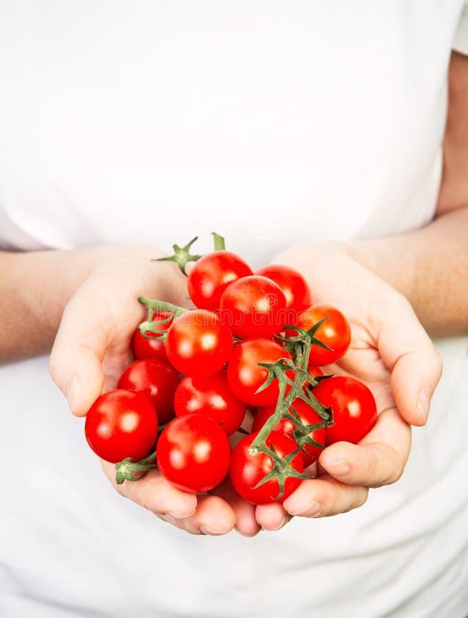 händer som rymmer mogna tomater arkivfoton