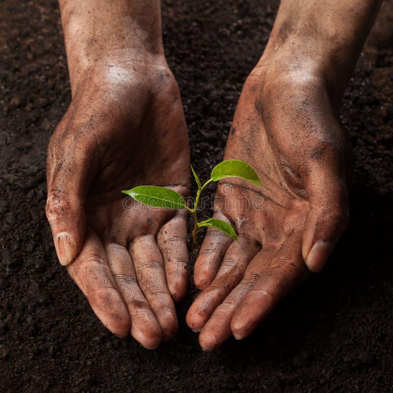 Händer som rymmer och skyddar en ung grön växt fotografering för bildbyråer