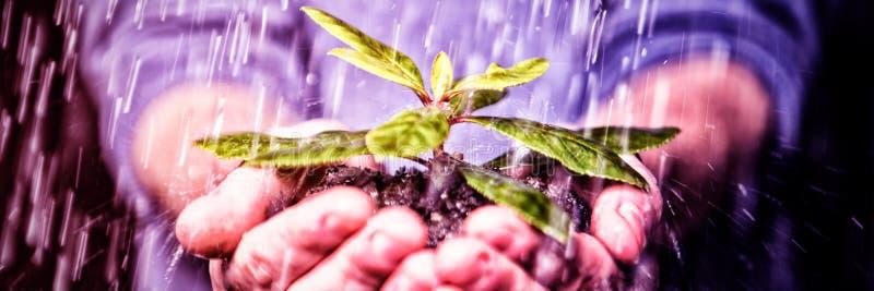 Händer som rymmer plantan i regnet royaltyfri foto