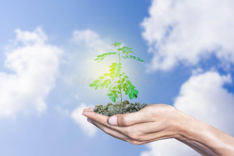 Händer som rymmer tillväxtträdet med himmel- och molnbakgrund royaltyfri fotografi
