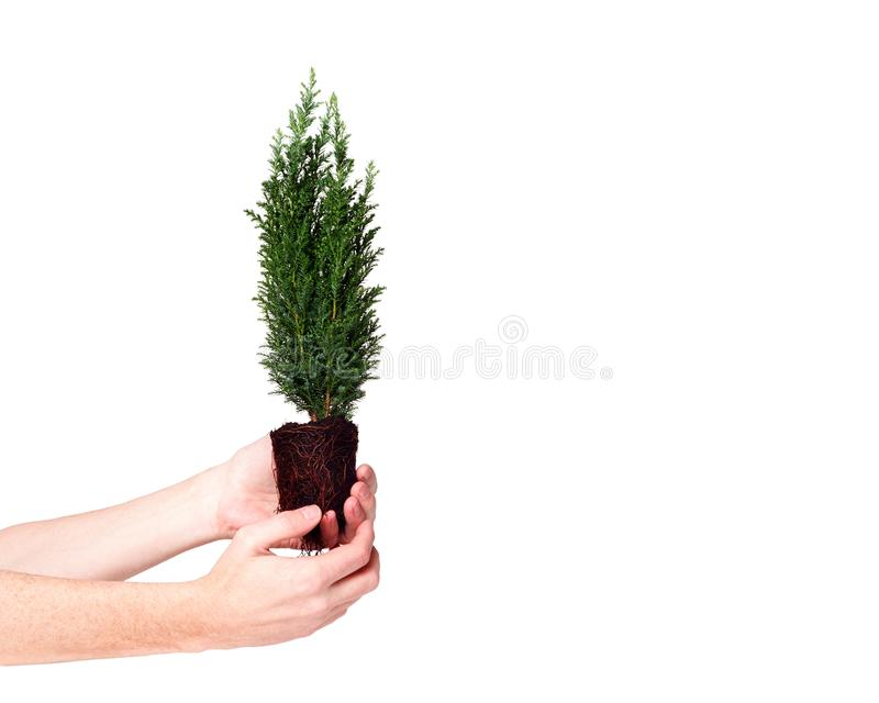 Händer som rymmer växtcypressplantan med jord på vit isolerad bakgrund April 22 för jorddag begrepp spara världen arkivbilder