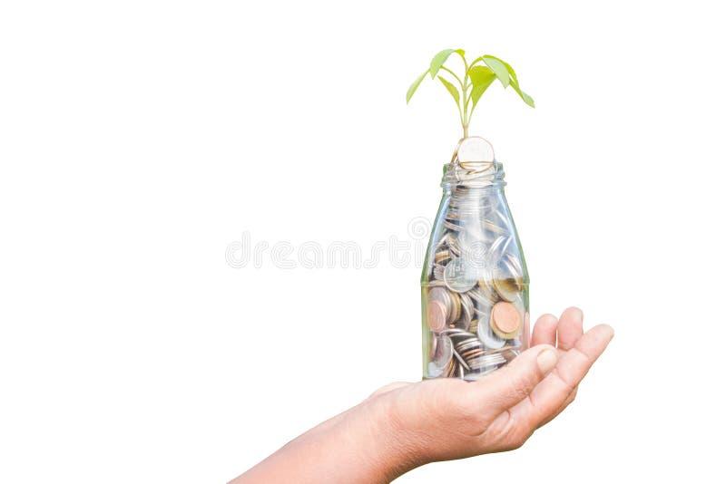 h?nder sparar att rymma den guld- myntbunten och det lilla gr?na tr?det isolerad vit bakgrund royaltyfri bild