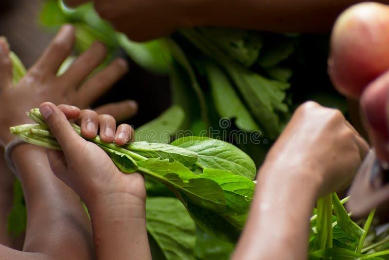 Händer väljer gröna grönsaker royaltyfria foton