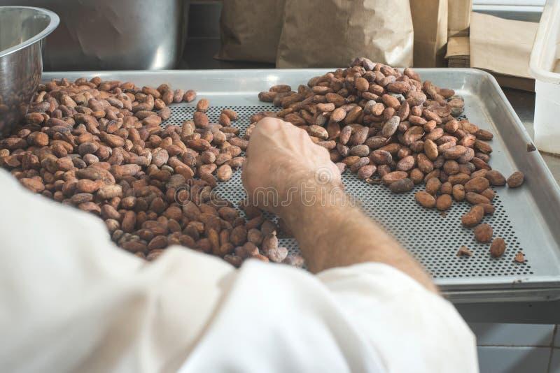 Händer väljer kakaobönor arkivbilder