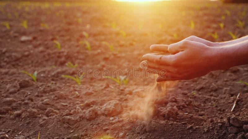 Händerna av den unga bonden håller fertil jord på fältet med havreplantor Organiskt produktbegrepp royaltyfri bild