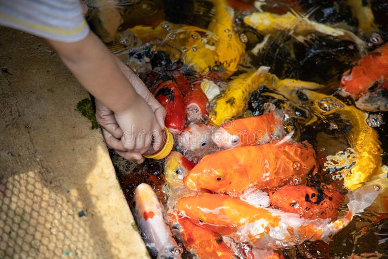 Händerna av ett barn som bär en flaska av den matande fisken för fiskmat i dammet arkivfoto