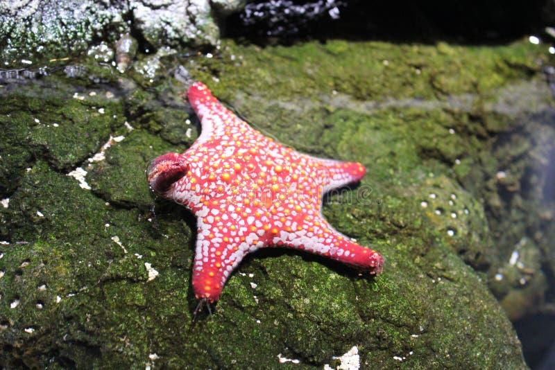 Händeschütteln Starfish lizenzfreie stockfotos