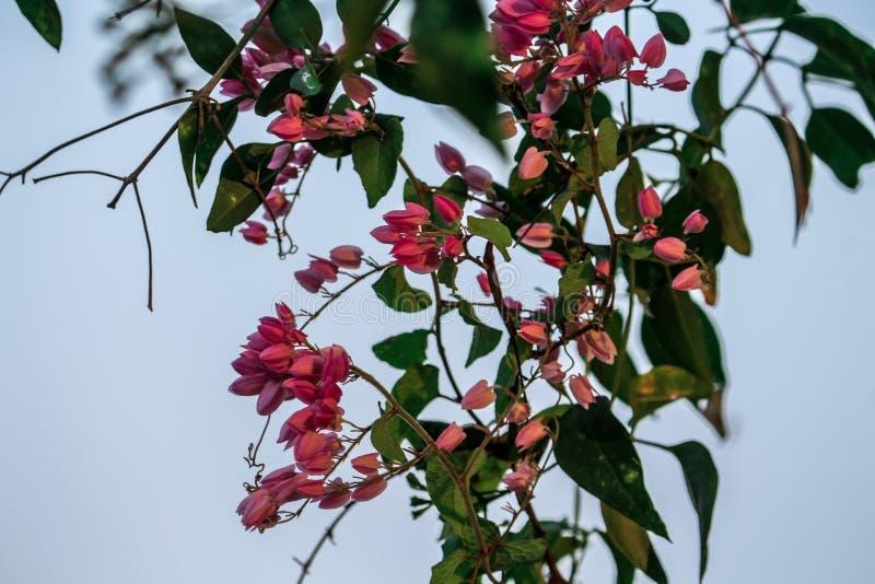 Hänga för blommor arkivfoton
