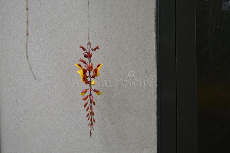 Hänga som är rött en gul blomma i hortusbotanicusen av Leiden Nederländerna royaltyfria bilder