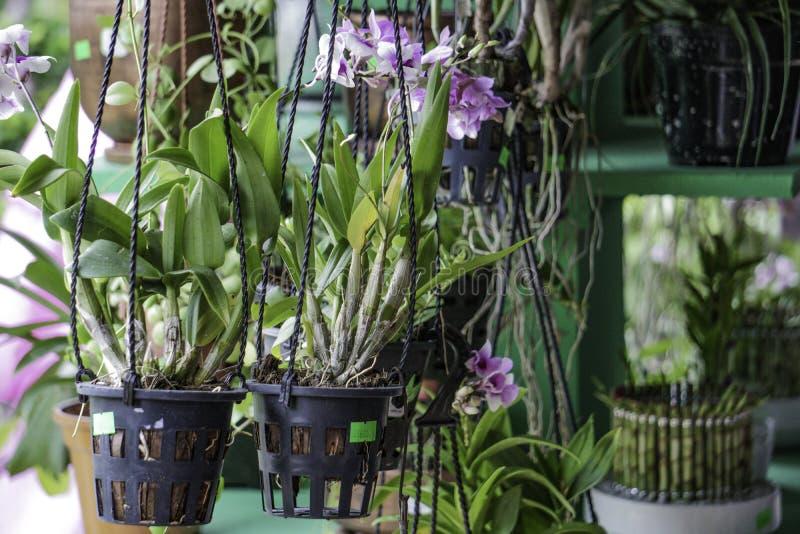 Hängande barnkammarekrukväxt på veranda fotografering för bildbyråer