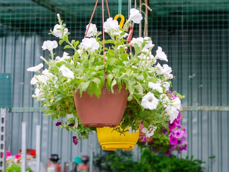 H?ngande blomkrukor i shoppar f?r tr?dg?rdsm?stare royaltyfria foton
