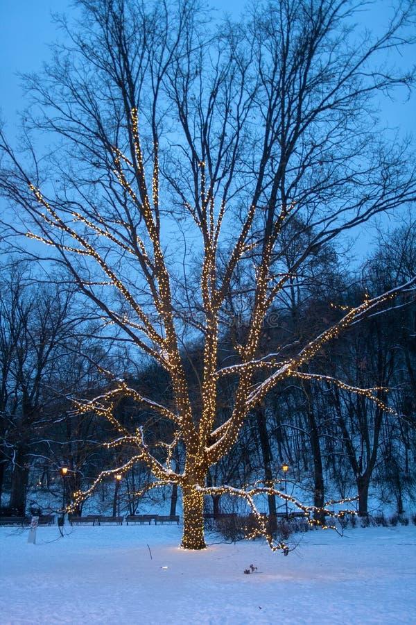 Hängande dekorativa ferieljus för träd royaltyfria bilder