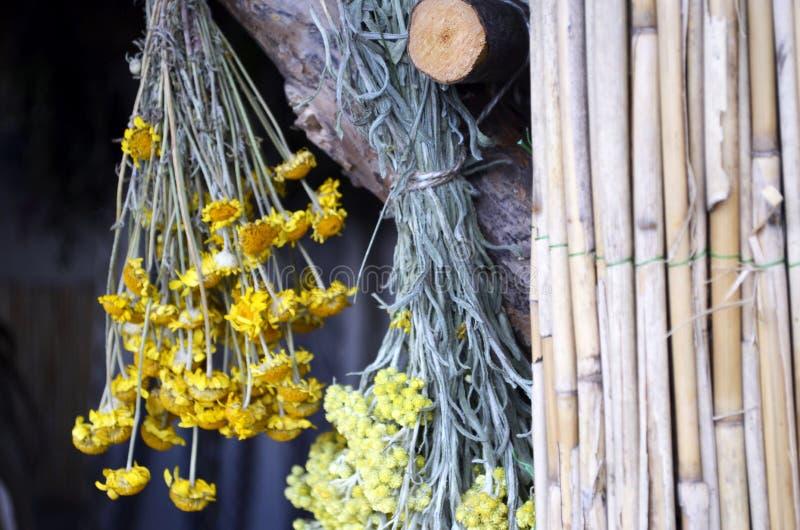 Hängande grupper av medicinska blommor arkivbild
