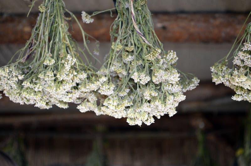 Hängande grupper av medicinska blommor arkivbilder