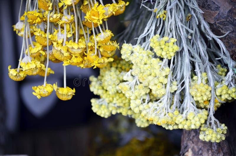 Hängande grupper av medicinska blommor royaltyfria foton